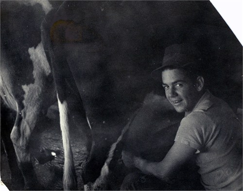 Bob Miner milking