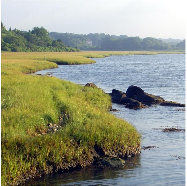 Allen's Pond, Dartmouth is the site of  Audubon Society Bird Walks