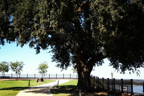 Natchez Bluff Park