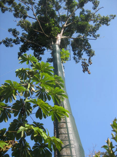 Tortuguero Canopy and Zip Line