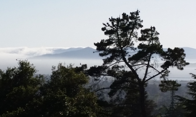 Angel Island through the trees
